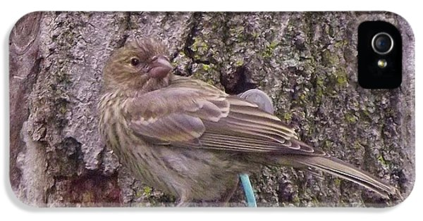 Red Crossbill Female  Indiana  Summer IPhone 5 / 5s Case by Rory Cubel