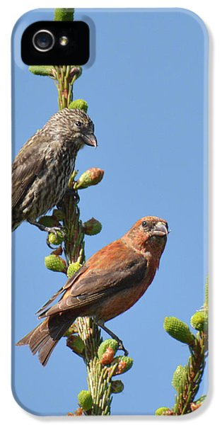 Red Crossbill Pair IPhone 5 / 5s Case by Alan Lenk
