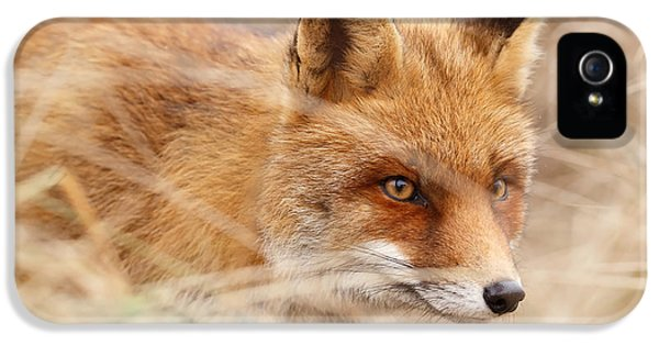 Red Fox On The Hunt IPhone 5 / 5s Case by Roeselien Raimond