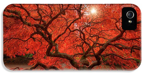 Foliage iPhone 5 Cases - Red Lace iPhone 5 Case by Dan Mihai