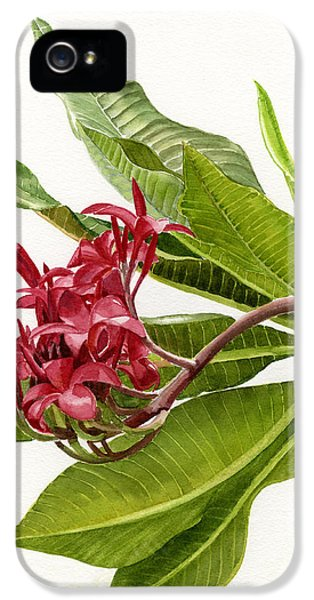 Red Plumeria Blossoms IPhone 5 / 5s Case by Sharon Freeman