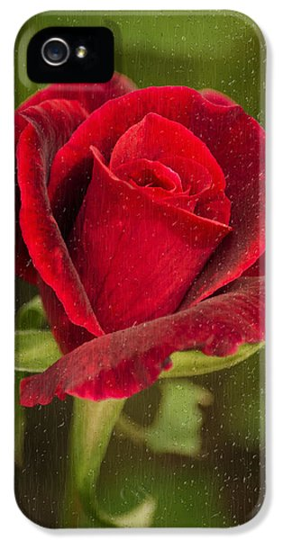 Rain.window iPhone 5 Cases - Red Rose Behind Wet Glass iPhone 5 Case by Christina Rollo
