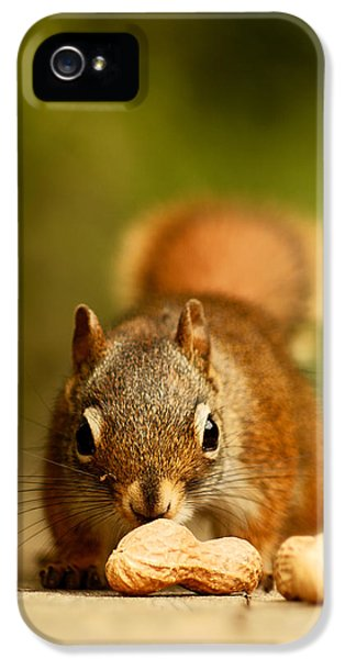 Red Squirrel   IPhone 5 / 5s Case by Cale Best