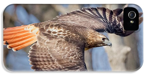 Redtail iPhone 5 Cases - Red Tailed Hawk Flying iPhone 5 Case by Bill Wakeley