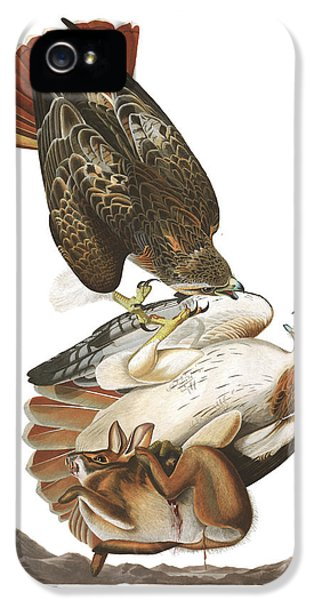 Red Tailed Hawk iPhone 5 Cases - Red Tailed Hawk iPhone 5 Case by John James Audubon