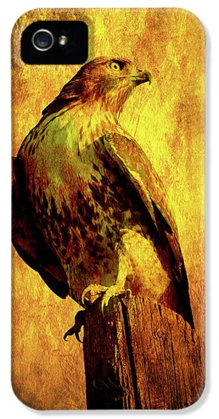 Red Tailed Hawk iPhone 5 Cases - Red Tailed Hawk . texture . 40D10167 iPhone 5 Case by Wingsdomain Art and Photography