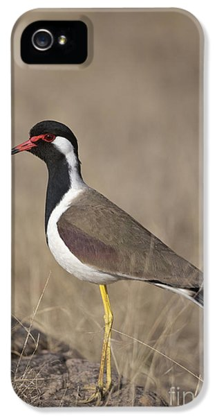 Red-wattled Lapwing IPhone 5 / 5s Case by Bernd Rohrschneider/FLPA