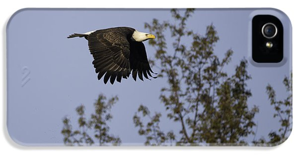 Oswego iPhone 5 Cases - Regal Eagle iPhone 5 Case by Everet Regal