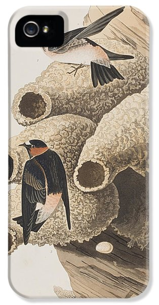 Republican Or Cliff Swallow IPhone 5 / 5s Case by John James Audubon