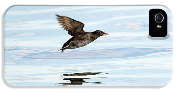 Rhinoceros Auklet Reflection IPhone 5 / 5s Case by Mike Dawson