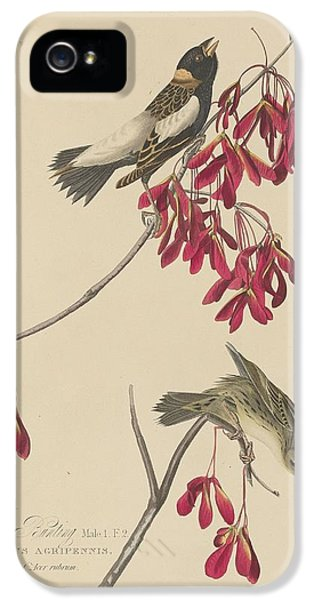 Rice Bunting IPhone 5 / 5s Case by John James Audubon