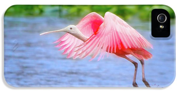 Rise Of The Spoonbill IPhone 5 / 5s Case by Mark Andrew Thomas