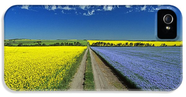 Colour Image iPhone 5 Cases - Road Through Flowering Flax And Canola iPhone 5 Case by Dave Reede