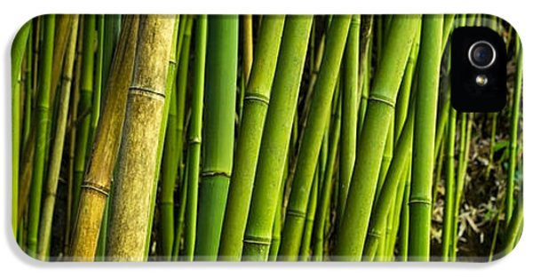 Road To Hana Bamboo Panorama - Maui Hawaii IPhone 5 / 5s Case by Brian Harig
