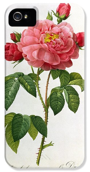 Blooming iPhone 5 Cases - Rosa Gallica Aurelianensis iPhone 5 Case by Pierre Joseph Redoute