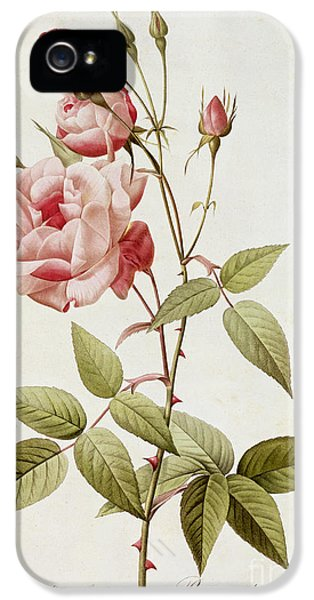 Rosa Indica Vulgaris IPhone 5 / 5s Case by Pierre Joseph Redoute