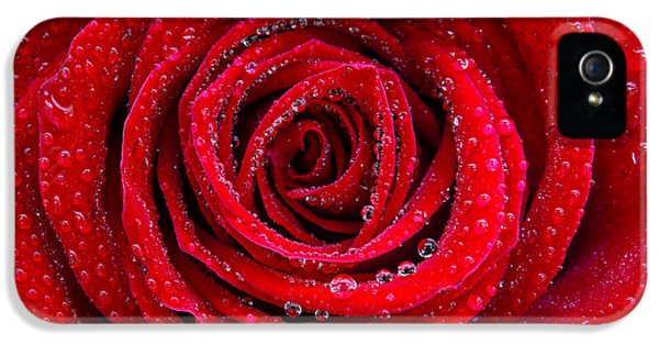 Anniversary iPhone 5 Cases - Rose and Drops iPhone 5 Case by Carlos Caetano