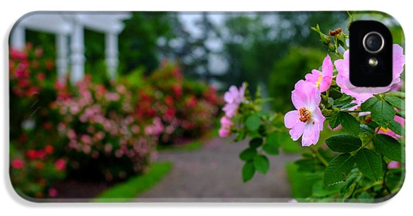 Rosa Acicularis iPhone 5 Cases - Rose Garden Gateway iPhone 5 Case by Chris Bordeleau