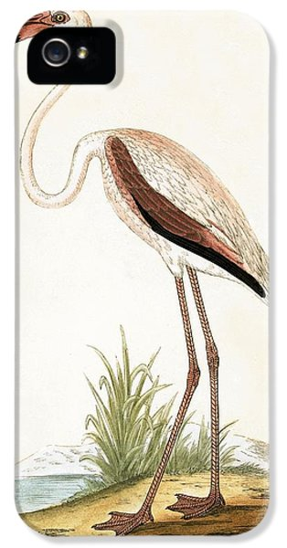 Rosy Flamingo IPhone 5 / 5s Case by English School