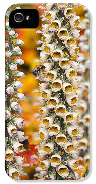 Rusty Foxgloves IPhone 5 / 5s Case by Tim Gainey