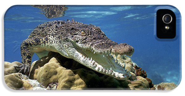 Saltwater Crocodile Smile IPhone 5 / 5s Case by Mike Parry
