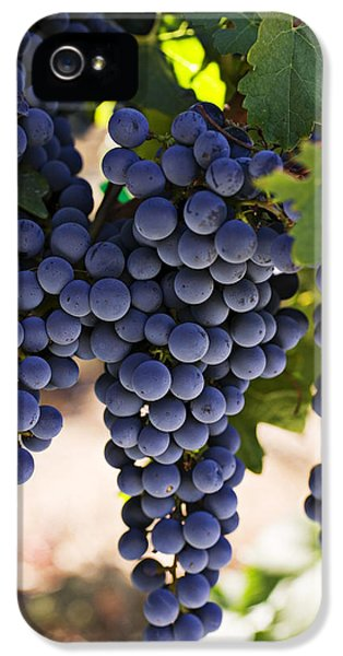 Foliage iPhone 5 Cases - Sauvignon grapes iPhone 5 Case by Garry Gay