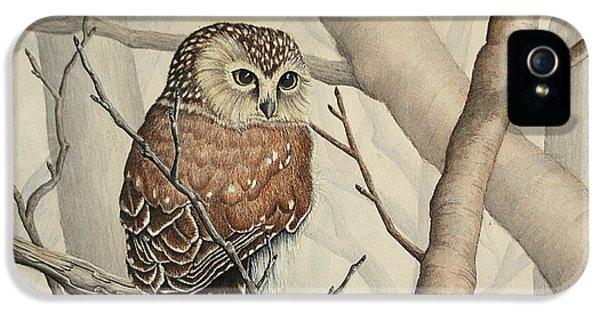 Bird Watcher iPhone 5 Cases - Sawhet Owl Woods Watcher iPhone 5 Case by Renee Forth-Fukumoto
