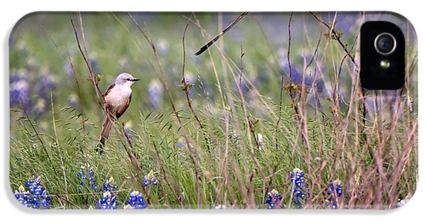 Scissor-tailed Flycatchers IPhone 5 / 5s Case by Cathy Alba