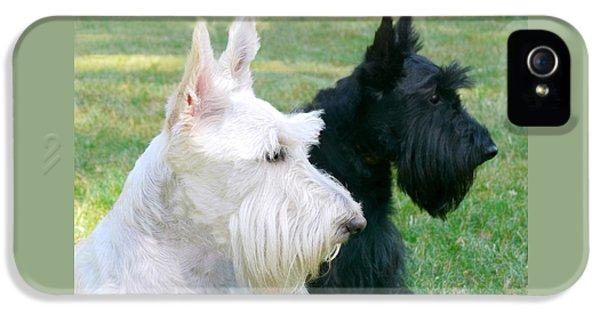 Scottie iPhone 5 Cases - Scottish Terrier Dogs iPhone 5 Case by Jennie Marie Schell