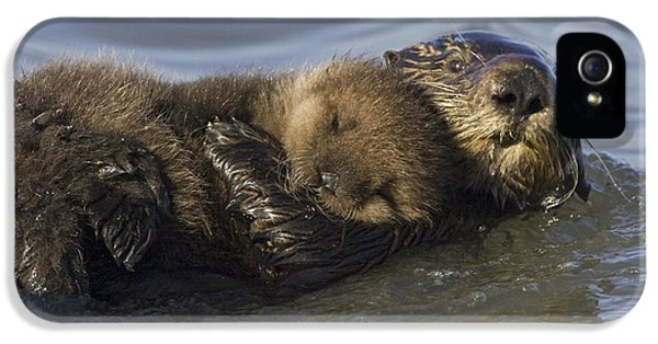 Sea Otter Mother With Pup Monterey Bay IPhone 5 / 5s Case by Suzi Eszterhas