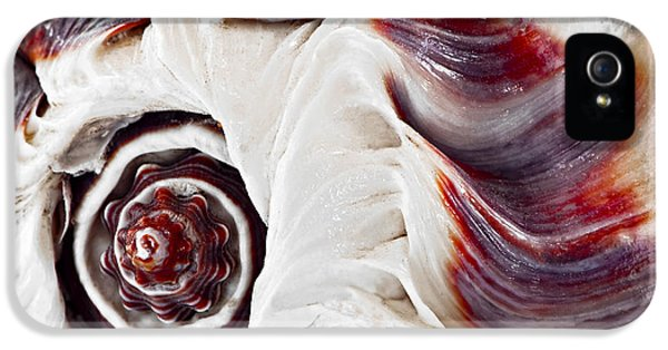 Conch iPhone 5 Cases - Seashell detail iPhone 5 Case by Elena Elisseeva