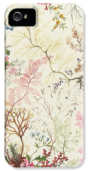 Arts And Crafts Movement iPhone 5 Cases - Seaweed design for silk material iPhone 5 Case by William Kilburn