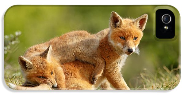Sibbling Love - Playing Fox Cubs IPhone 5 / 5s Case by Roeselien Raimond