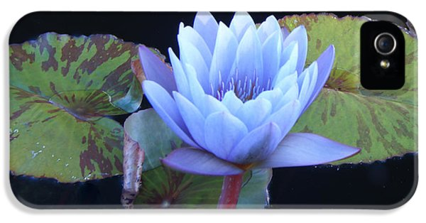 Chlorophyll iPhone 5 Cases - Single Lotus Blossom iPhone 5 Case by Douglas Barnett