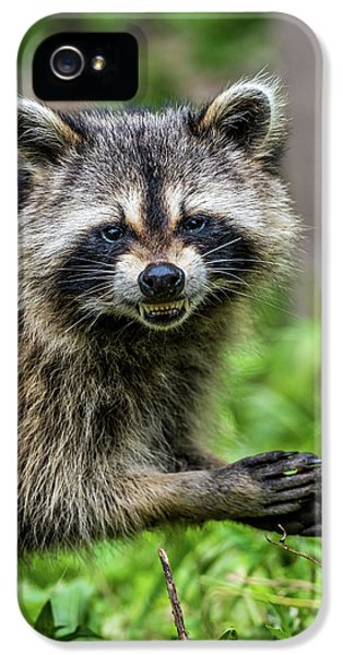 Smiling Raccoon IPhone 5 / 5s Case by Paul Freidlund