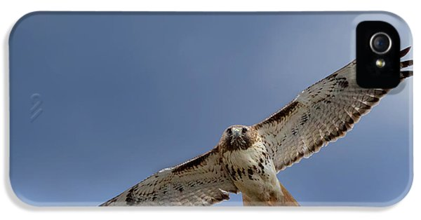 Redtail iPhone 5 Cases - Soaring Red Tail iPhone 5 Case by Bill  Wakeley