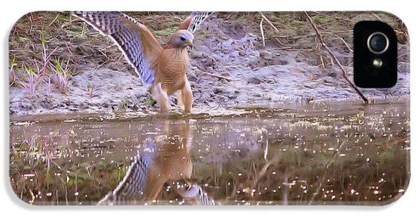 Hawk iPhone 5 Cases - Soft Landing on the Pond iPhone 5 Case by Carol Groenen