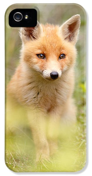 Young Foxes iPhone 5 Cases - SoftFox iPhone 5 Case by Roeselien Raimond
