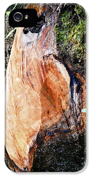 Burnt Umber iPhone 5 Cases - Solemnity iPhone 5 Case by Christi Kraft