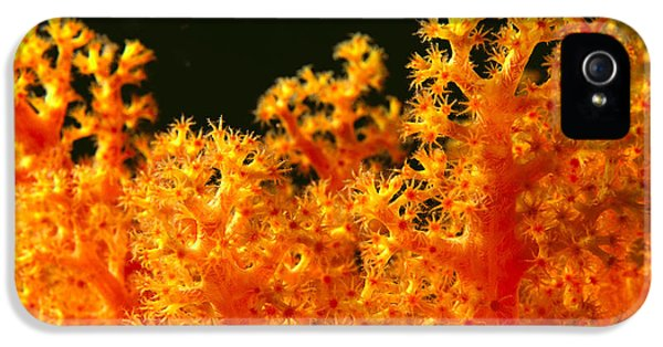 Polyp iPhone 5 Cases - Soloman Islands, Marine L iPhone 5 Case by Ed Robinson - Printscapes