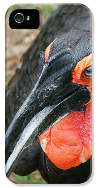 Southern Ground Hornbill IPhone 5 / 5s Case by Ernie Echols