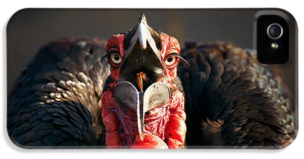 Feeding iPhone 5 Cases - Southern Ground Hornbill swallowing a seed iPhone 5 Case by Johan Swanepoel