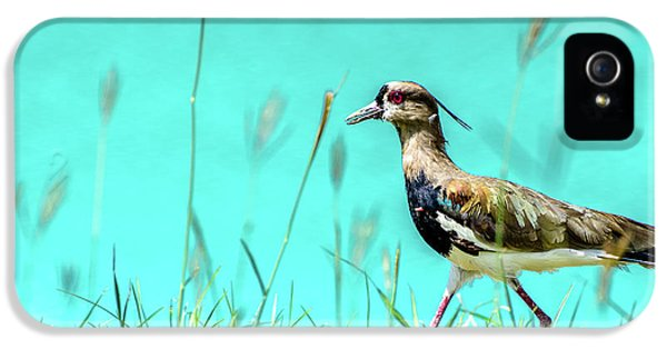 Southern Lapwing IPhone 5 / 5s Case by Randy Scherkenbach