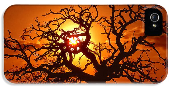 Spooky iPhone 5 Cases - Spooky Tree iPhone 5 Case by Stephen Anderson