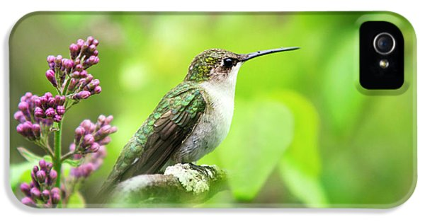 Spring Beauty Ruby Throat Hummingbird IPhone 5 / 5s Case by Christina Rollo
