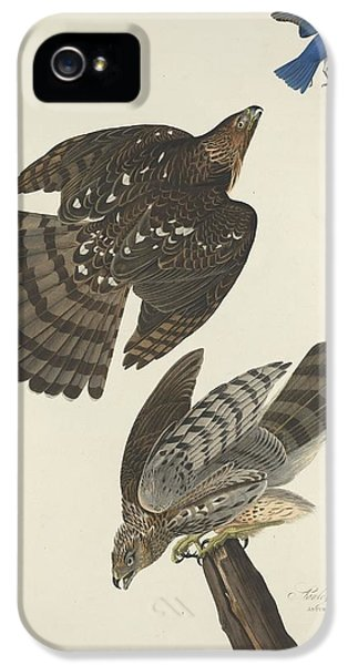 Stanley Hawk IPhone 5 / 5s Case by John James Audubon