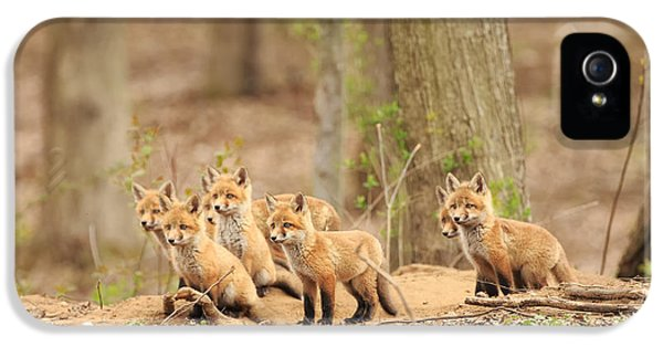Fox Kits iPhone 5 Cases - Sudden Alert iPhone 5 Case by Everet Regal