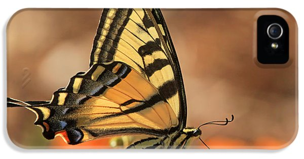 Swallowtail iPhone 5 Cases - Summer Portrait iPhone 5 Case by Donna Kennedy