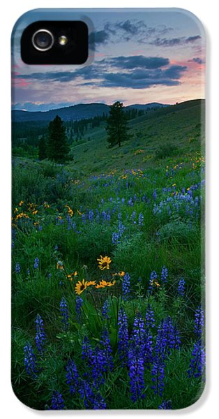 Lupine iPhone 5 Cases - Sunset Meadow Trail iPhone 5 Case by Mike  Dawson
