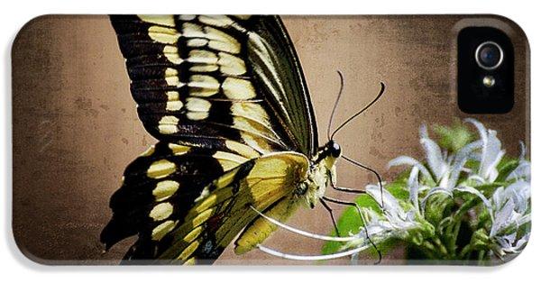 Swallowtail iPhone 5 Cases - Swallowtail iPhone 5 Case by Saija  Lehtonen